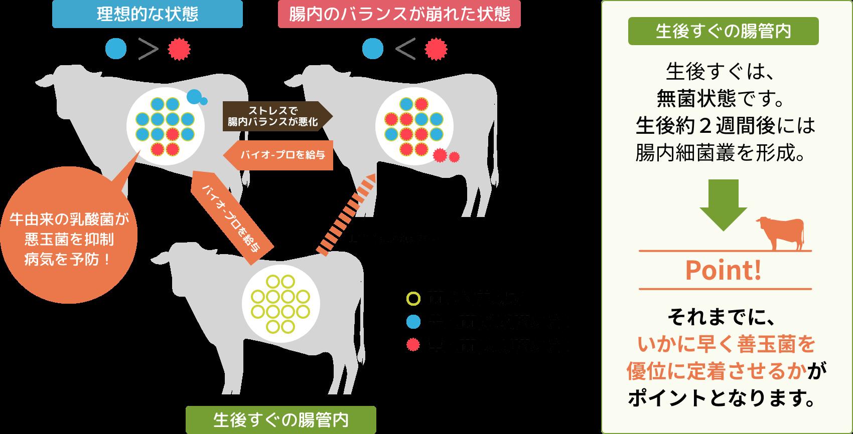 牛由来の3種の乳酸菌